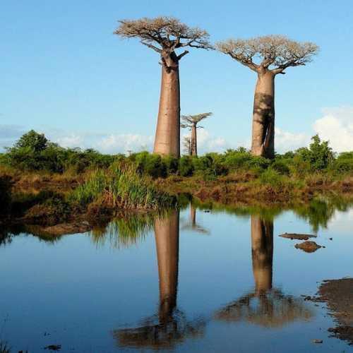 Madagascar