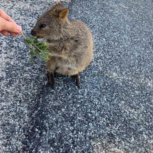 Rottnest, Australia