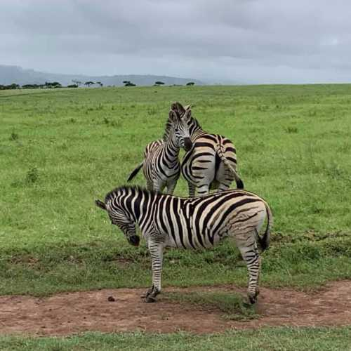 Тала парк, South Africa