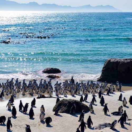 Саймонс таун, South Africa