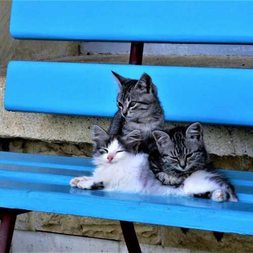 Котята на скамейке в санатории.
