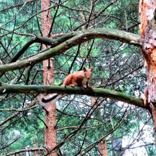 Белка на дереве в парке.