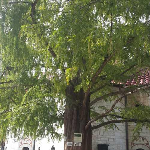 В монастыре Бачково