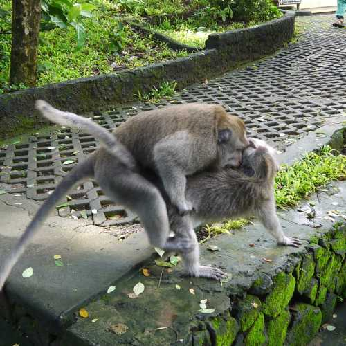 Monkey forest, Indonesia