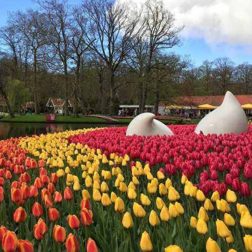 Кёкенхоф, Нидерланды (Голландия)