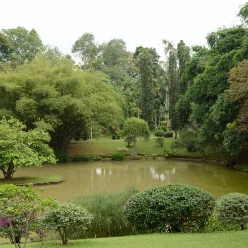 Королівский ботанічний сад<br/>