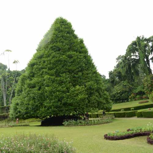 Royal Botanical Gardens, Sri Lanka