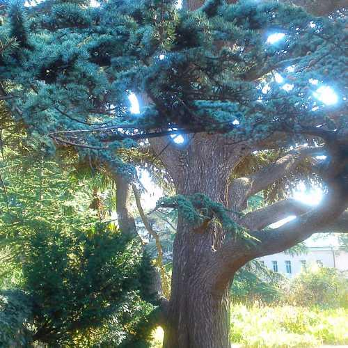 Nikitsky Botanical Garden, Crimea