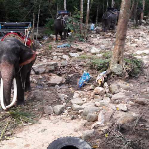 На острове Самуи можно заказать экскурсию на Слоновью ферму — покормить и покататься на слонах<br/> You can go to the Elephant's farm, where you can feed and ride an elephant.
