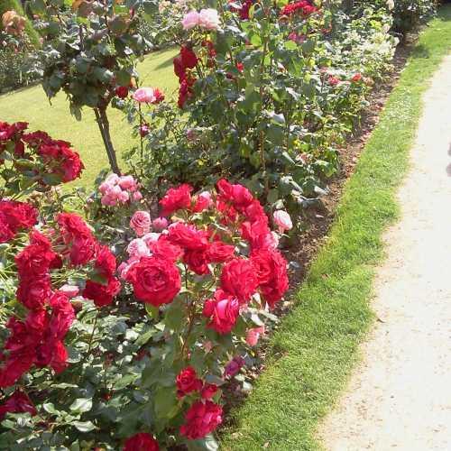 Цветы музея Родена