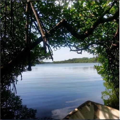 Madu River Wetlands, Sri Lanka