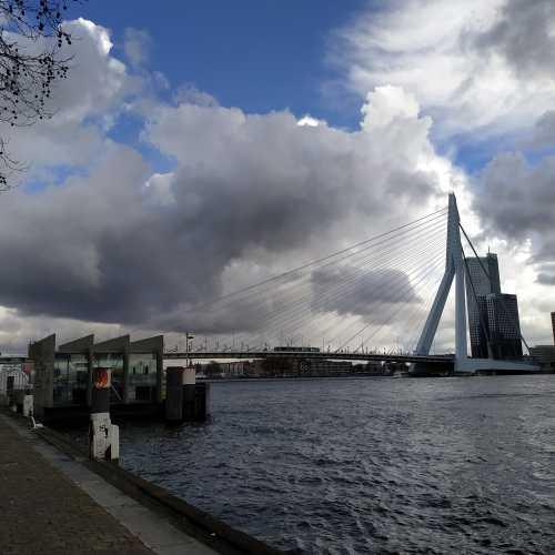 Роттердам. Вид на мост Эразма. (17.03.2019)