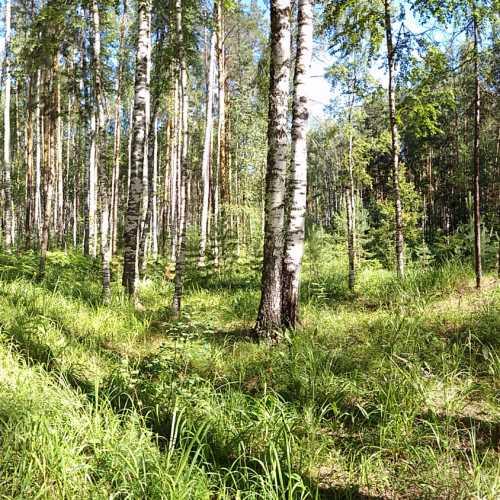 Марий Чодра, Russia