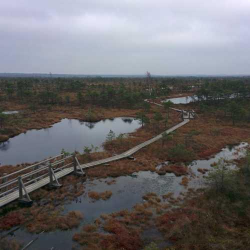 Кемерское болото со смотровой вышки. Через болото проложено две дороги. Если выбрать длинный маршрут, то можно полюбоваться на пейзажи с высоты.