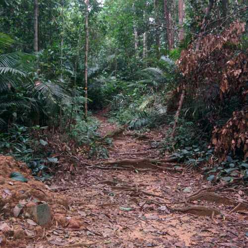 Национальный парк Таман Негара, Малайзия