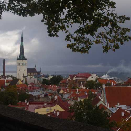 Крыши Таллинна.