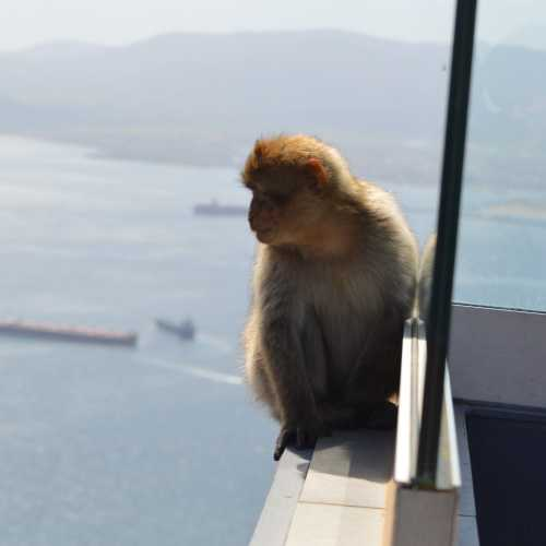 Cable Car Top Station, Gibraltar