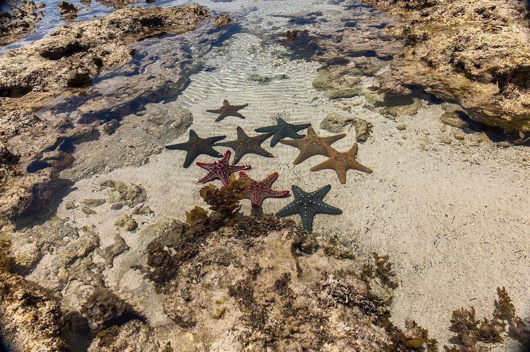 Ради таких местечек шли до рифов около сорока минут вброд… офис звёзд во время отлива… zanzibar africa ocean #песок #звезды #океан #отлив #африка ⭐️