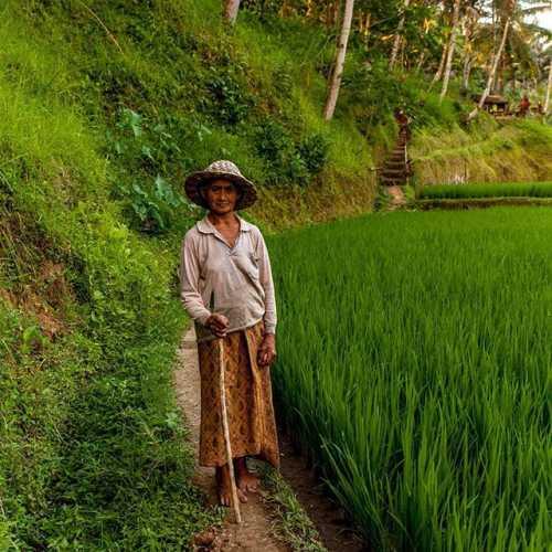 Обитатель рисовых террас Tegulalang #бали light nature portret #баливлицах