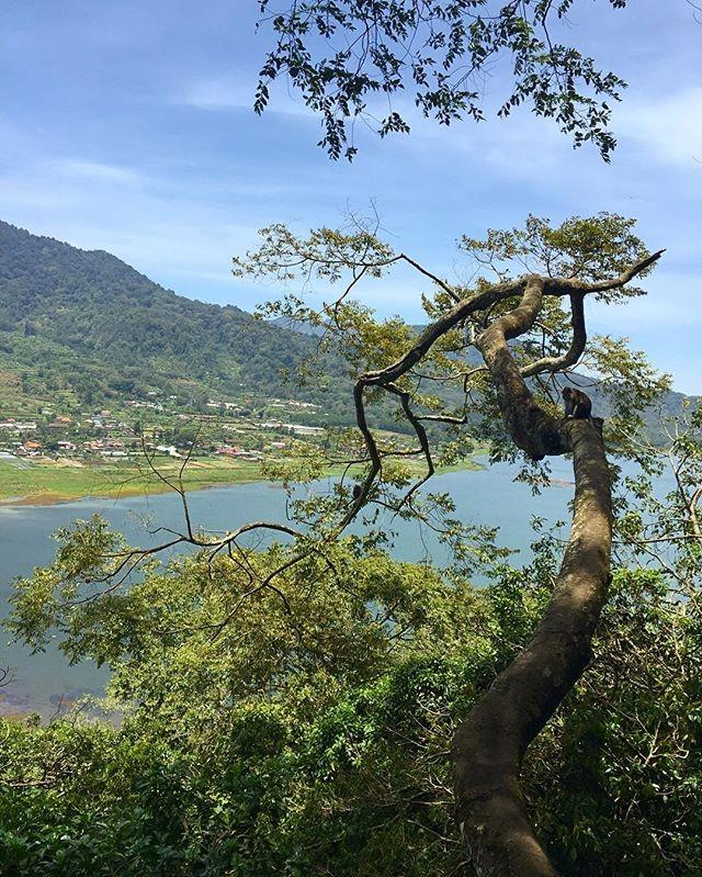 Обезьян на дереве любуется видом на озеро
