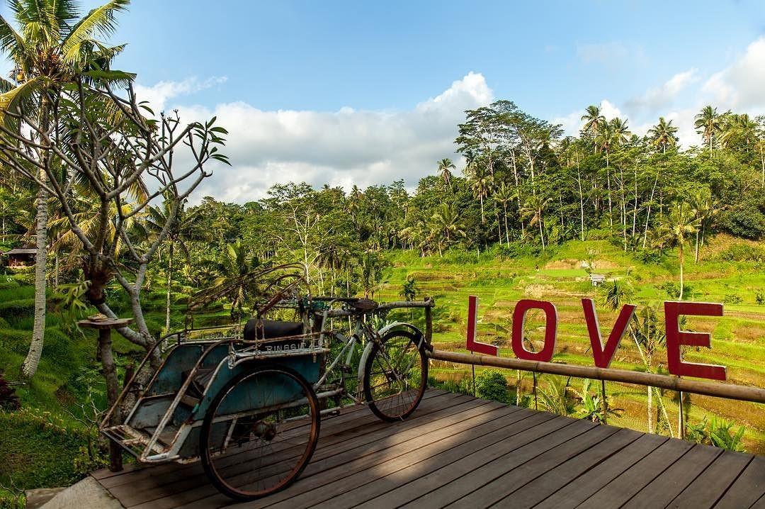 Все те же террасы, велосипед и Лубовъ! rice bali nature love bali