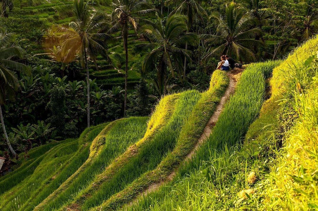 Кусок романтики с рисовых террас Tegulalang bali bali
