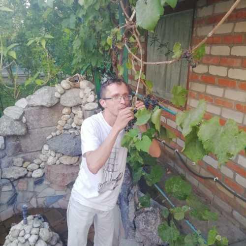 винницкий виноград — масло масленое)))