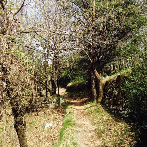 Лес в Андорре =)