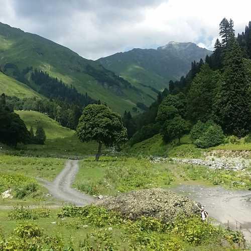 Alpine meadows Abkhazia, Abhazia