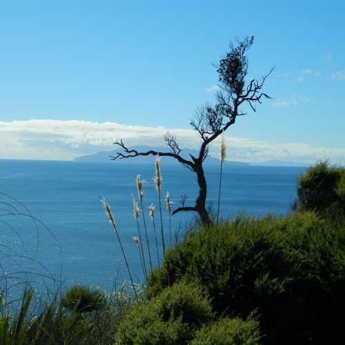 Кавау, New Zealand