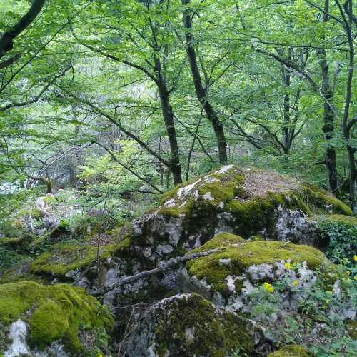 лес вдоль тихого течения реки