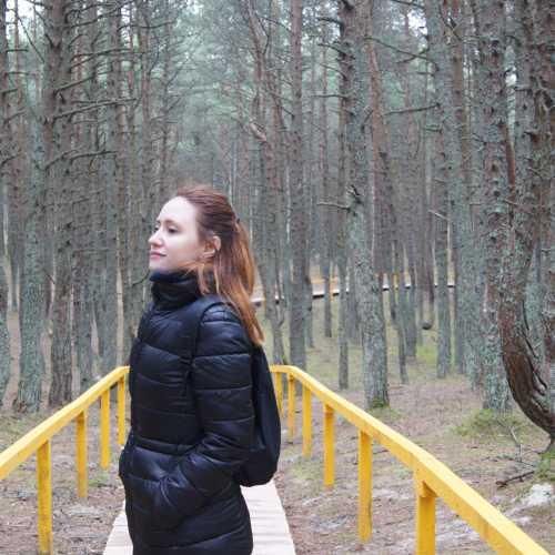 Куршская коса. Танцую лес.