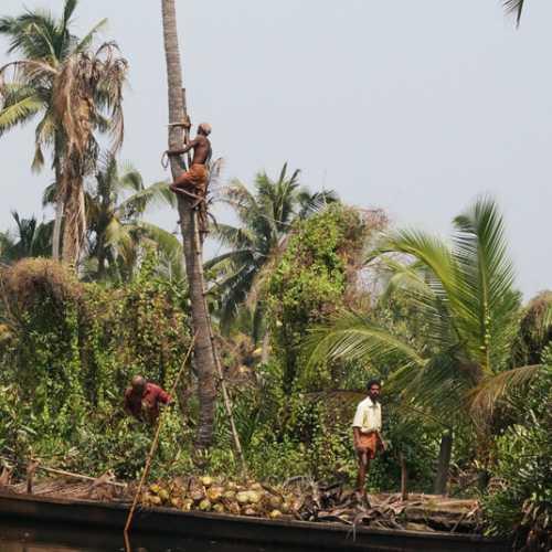 Наверх за кокосами.