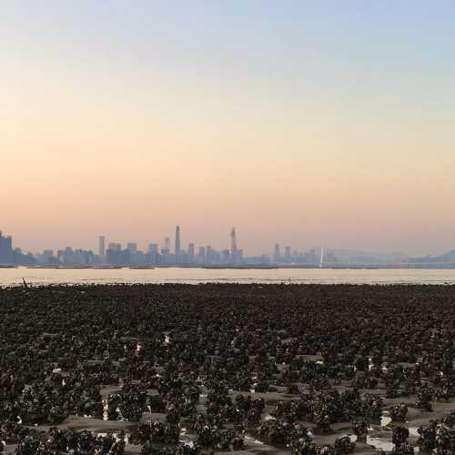 Oyster field, Ha Pak Nai