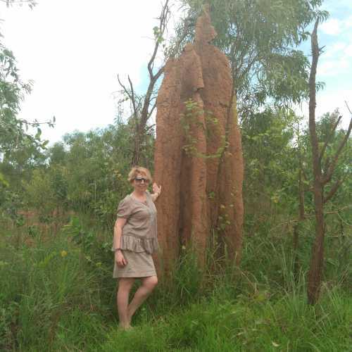 австралийские термитники