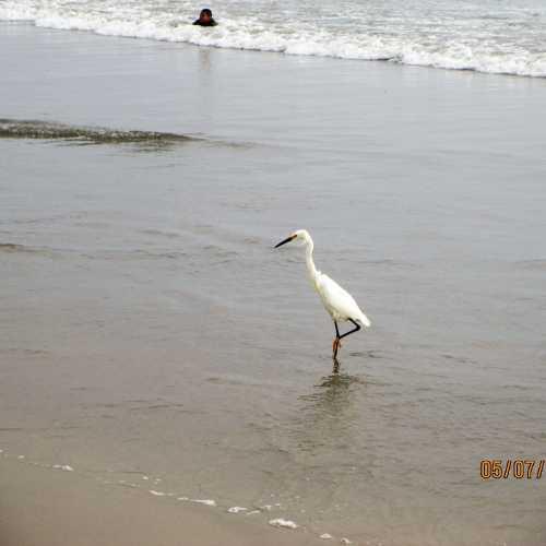 Santa Monica, CA <br/> <a href=