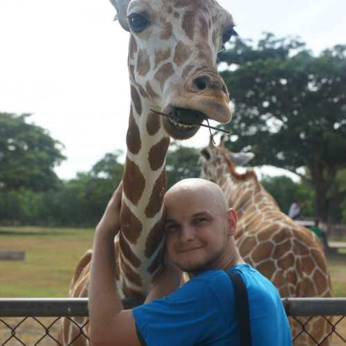 Потискать жирафа в парке Калауит — бесценно!