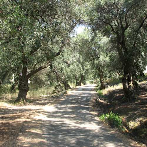 Дорога через оливковую рощу<br/>