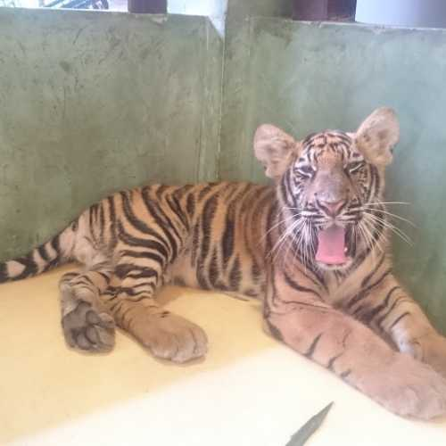 Королевство Тигров, Thailand
