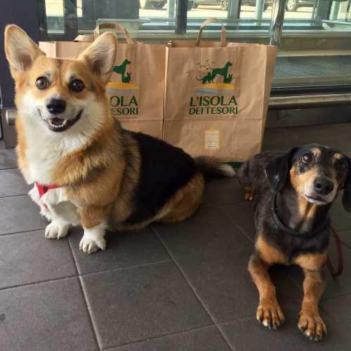 Собачий шоппинг
