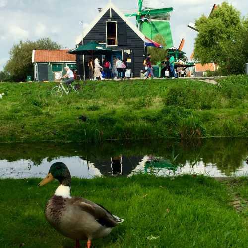 Kinderdijk — Den Elshout