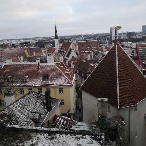 Kohtuotsa vaateplatvorm, Estonia