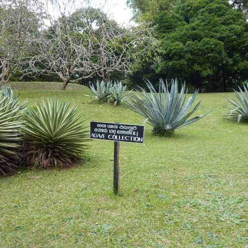 Королевский ботанический сад Перадения в Канди, Sri Lanka
