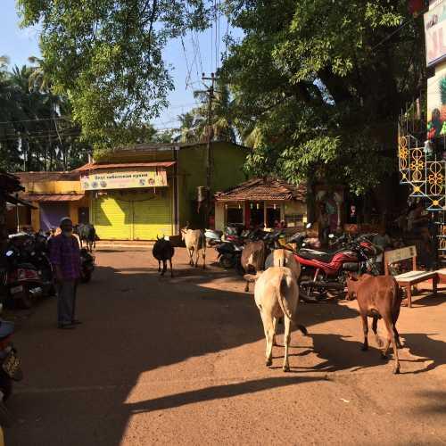 Морджим, Индия