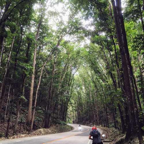 Man made forest… наверное они очень устали все это сажать…