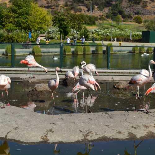 Santiago Metropolitan Park, Chile