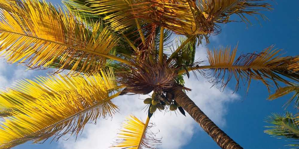 French Guiana photo