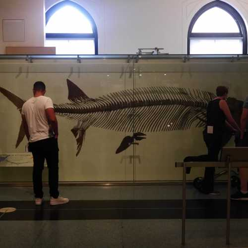 American Museum Of Natural History<br/> New York,NY