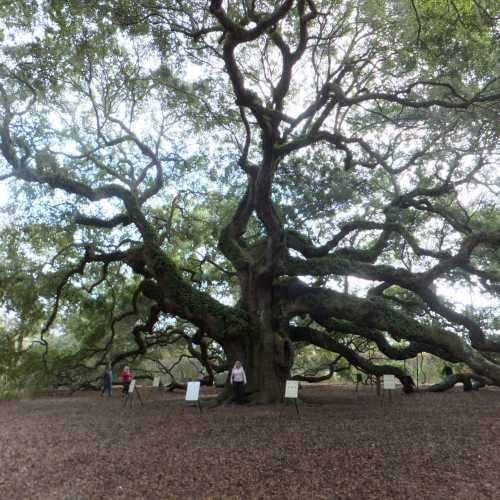 The ANGEL OAK<br/> one of a kind