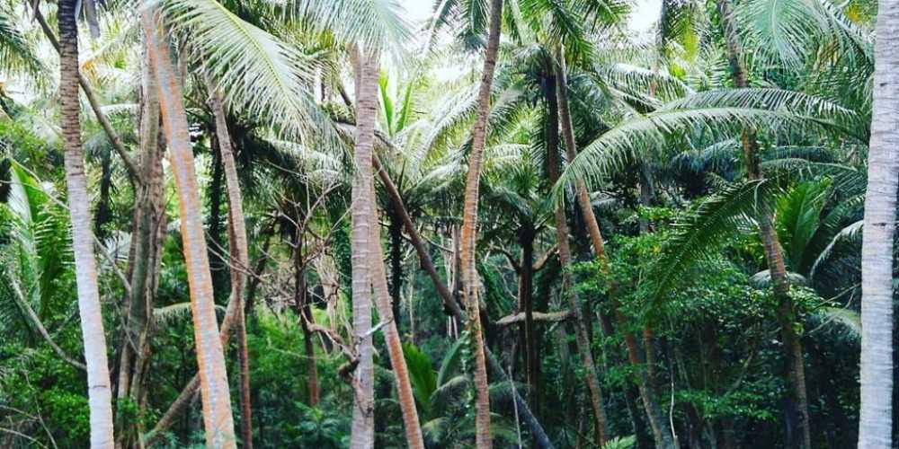 Новая Каледония о-в фото